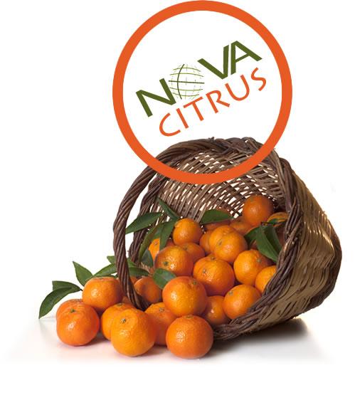 Nova Citrus